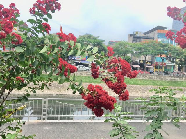 Với vẻ đẹp này, không phải ngẫu nhiên hoa tường vi lại được yêu thích và thu hút nhiều đến vậy.