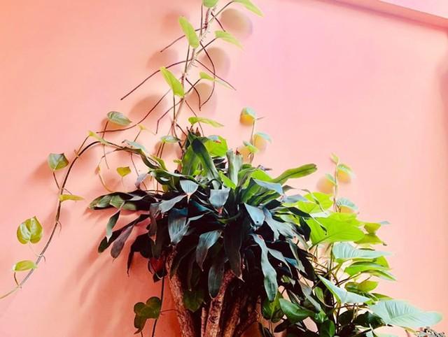 Bộ sưu tập cây xanh của nữ danh hài nhiều lên mỗi ngày nhờ chị chăm tìm mua tại các nhà vườn, đồng thời được người hâm mộ gửi tặng.