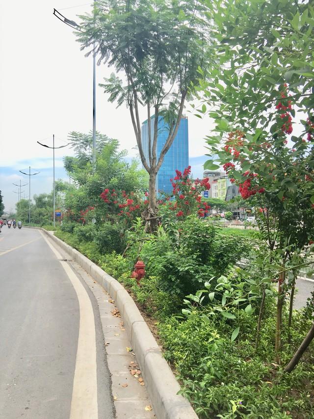 Tại đường Láng, sau khi mở rộng cũng được trồng thêm tường vi và nhiều loài hoa khác khiến cho con đường này giờ đây như được khoác áo mới