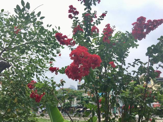 Cô Hoàng Lan (Đống Đa, Hà Nội) so sánh ví von: Trước đây khi hoa chưa nở, con đường này đã được bao phủ bởi rất nhiều cây xanh tạo không khí trong lành, thoáng mát. Đến nay, những bông hoa ấy bắt đầu nở rộ thì đường Láng đang như một cô gái đẹp khoác áo đỏ rực rỡ và quyến rũ lạ thường.
