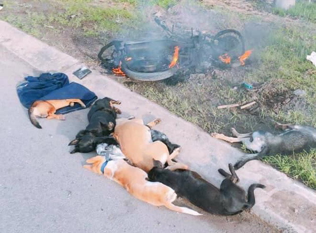 Đánh và đốt xe của kẻ trộm chó: Coi chừng bị truy cứu trách nhiệm hình sự - Ảnh 2.