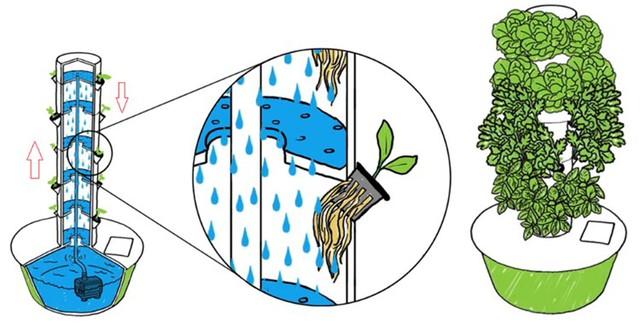 Trong trụ khí canh, nước dinh dưỡng được dẫn lên cao, phun dạng hơi sương xuống dưới, cung cấp dinh dưỡng cho rễ cây, nuôi cây lớn nhanh, tốt hơn nhiều so với bình thường.