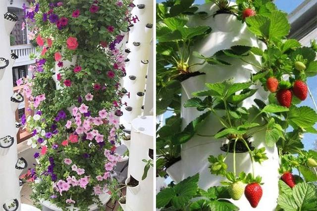 Không chỉ trồng rau, mô hình khí canh còn phù hợp để trồng nhiều loại cây cảnh, cây ăn quả. Ảnh: Thanh Hiếu