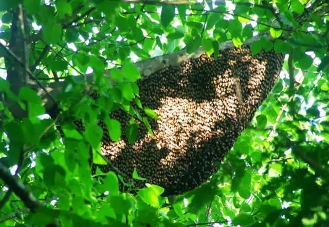 Đi lấy mật ong rừng, người đàn ông ở Hà Tĩnh bị ong đốt tử vong - Ảnh 1.