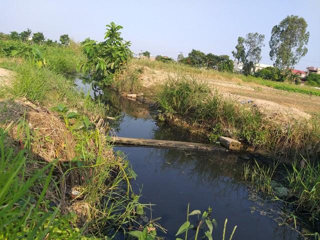 Hải Phòng: Hàng chục hecta ruộng ở huyện An Dương bỏ hoang vì mương thủy lợi ô nhiễm - Ảnh 1.