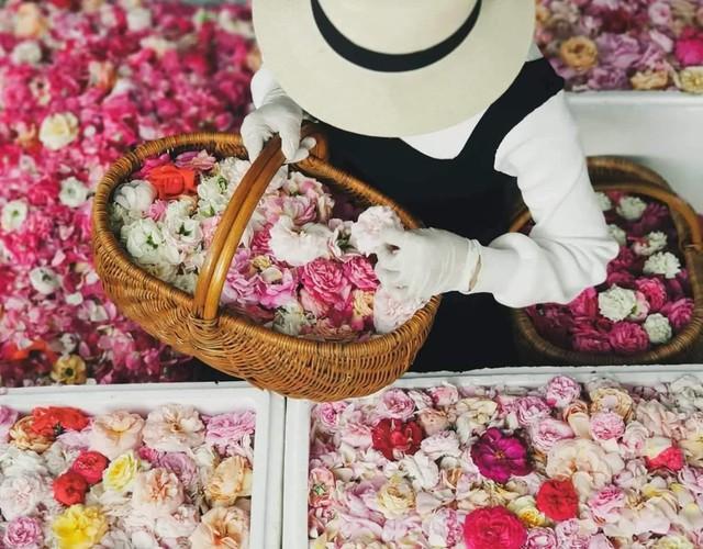 Chính vì lựa chọn trồng hoa theo phương pháp thuận tự nhiên nên việc trồng hoa hồng của Kim Ngọc và người bạn đã phải trải qua khá nhiều khó khăn. Hoa hồng ngoại đa phần là các giống hoa ưa lạnh, thời tiết nắng nóng khiến cây bị sâu bệnh nhiều và cho sản lượng, chất lượng hoa thấp. Chưa kể, vì không được sử dụng các loại thuốc BVTV nên mất khá nhiều chi phí thuê người làm cỏ, bón phân, bắt sâu.