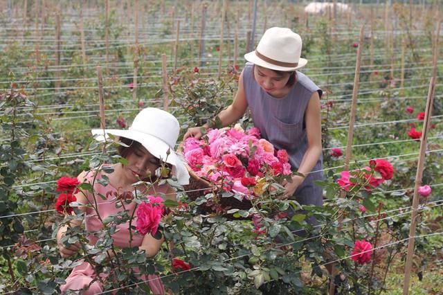 Ngoài ra, vườn hoa được chăm bón hoàn toàn bằng phân cá ủ pha loãng, không chứa bất kì một loại thuốc hóa học nào.
