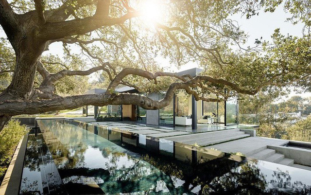 Một bể bơi được xây dựng ngay dưới tán cây để bề mặt nước giống như gương sẽ soi bóng dáng phản chiếu của cây rất duyên dáng.