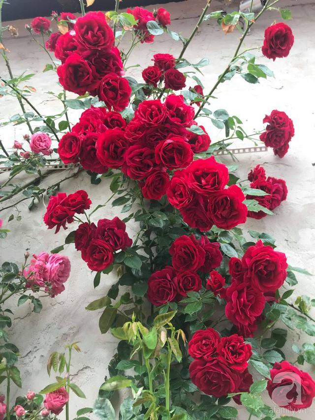 Hoa nở chi chít bông.