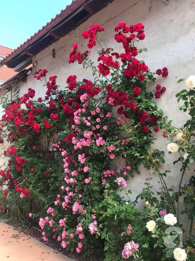 Hoa nở đẹp như bức tranh.