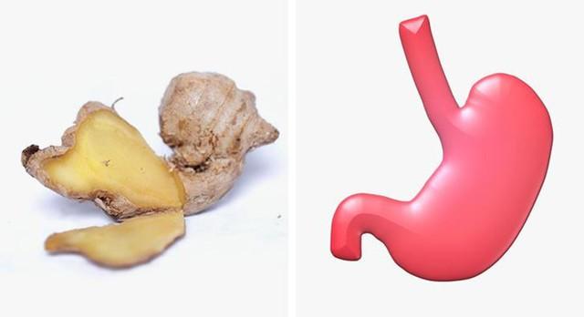 Gừng tác động lớn đến dạ dày của con người, có tác dụng giảm viêm. Gừng cũng giúp thúc đẩy lưu thông máu, kích thích tiêu hóa và hấp thụ dinh dưỡng tốt hơn. Bên cạnh đó, nó cũng ngăn ngừa đầy hơi, làm thư giãn các cơ của đường ruột, giúp bạn giảm đau dạ dày.