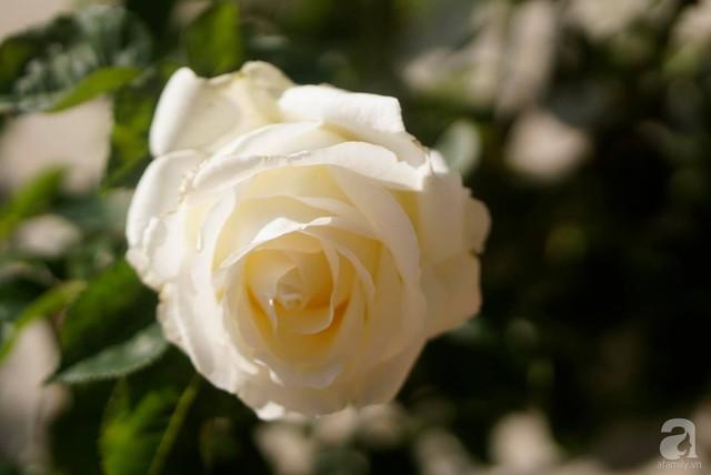 Người vợ trẻ yêu thích việc ngắm hoa, chụp ảnh cùng hoa.