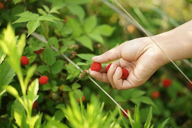 Các loại quả trong vườn.