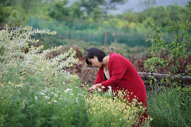 Khu vườn rộn rã hương sắc của các loài hoa.