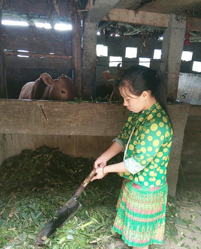 Một ngày vất vả kiếm tiền đi học của nữ sinh nghèo người Hmông được tuyển thẳng vào đại học - Ảnh 12.