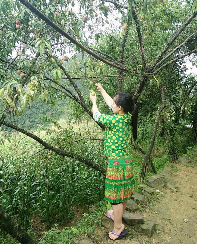 Một ngày vất vả kiếm tiền đi học của nữ sinh nghèo người Hmông được tuyển thẳng vào đại học - Ảnh 18.