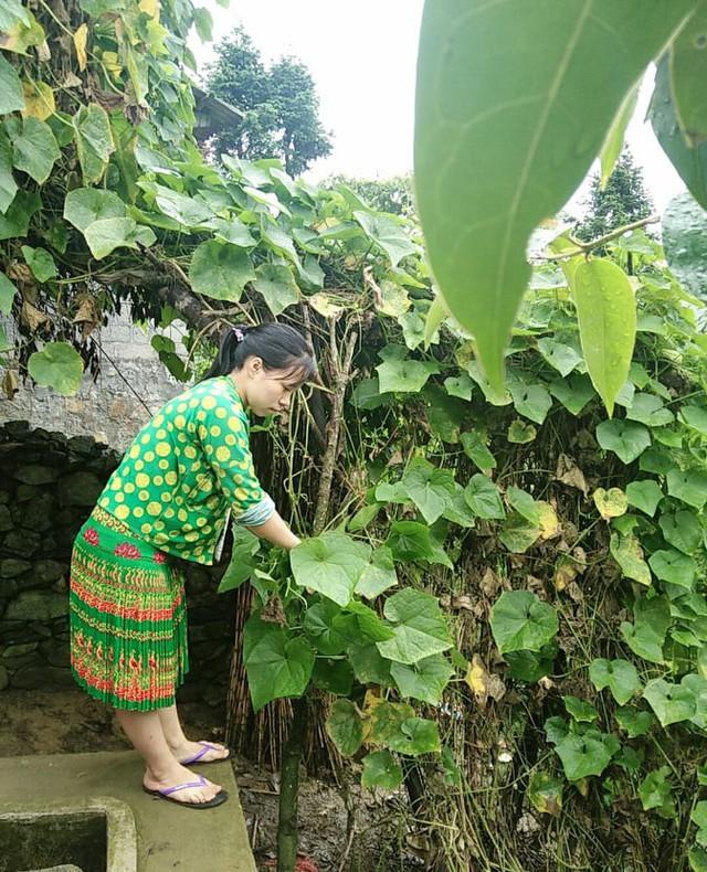 Một ngày vất vả kiếm tiền đi học của nữ sinh nghèo người Hmông được tuyển thẳng vào đại học - Ảnh 8.
