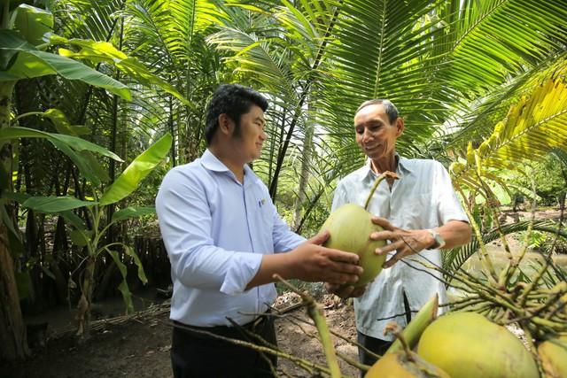 Trái dừa nguyên liệu đạt từ 11 -12 tháng tuổi, cho quả ngon và chất lượng tốt nhất