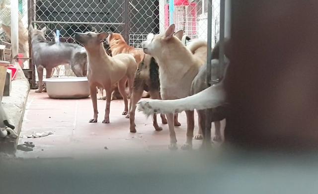 Hà Nội: Người già, trẻ nhỏ phải bỏ nhà bỏ cửa vì trung tâm vật nuôi gây ô nhiễm - Ảnh 2.