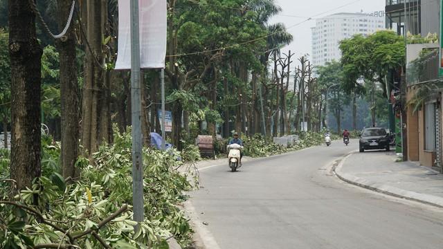 Hàng trăm cây hoa sữa ở Hà Nội bị chặt cành, cưa ngọn trong đêm - Ảnh 1.
