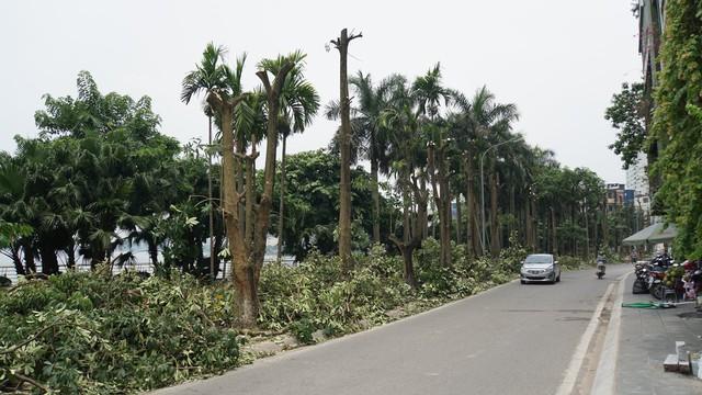 Hàng trăm cây hoa sữa ở Hà Nội bị chặt cành, cưa ngọn trong đêm - Ảnh 2.