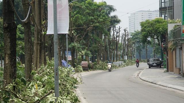 Hàng trăm cây hoa sữa ở Hà Nội bị chặt cành, cưa ngọn trong đêm - Ảnh 4.