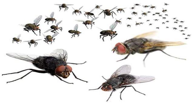 Cách xử trí nhanh khi bất ngờ côn trùng bay vào mũi, miệng - Ảnh 1.