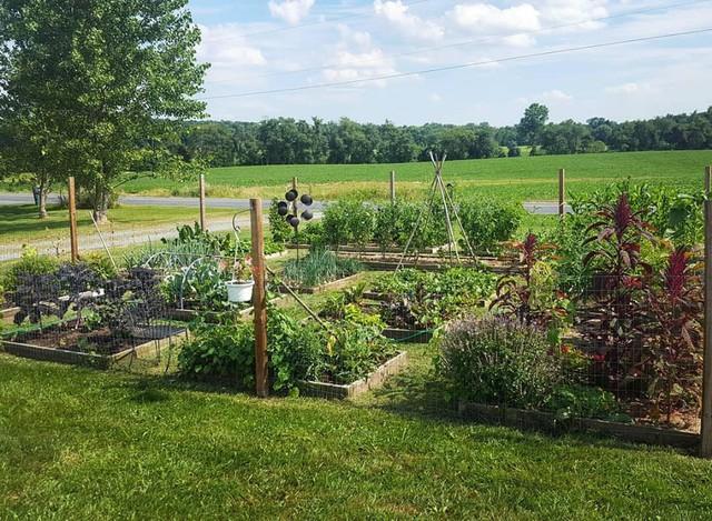 Megan trồng rất nhiều rau củ quả và một số trái cây từ tháng 3 đến tháng 12.