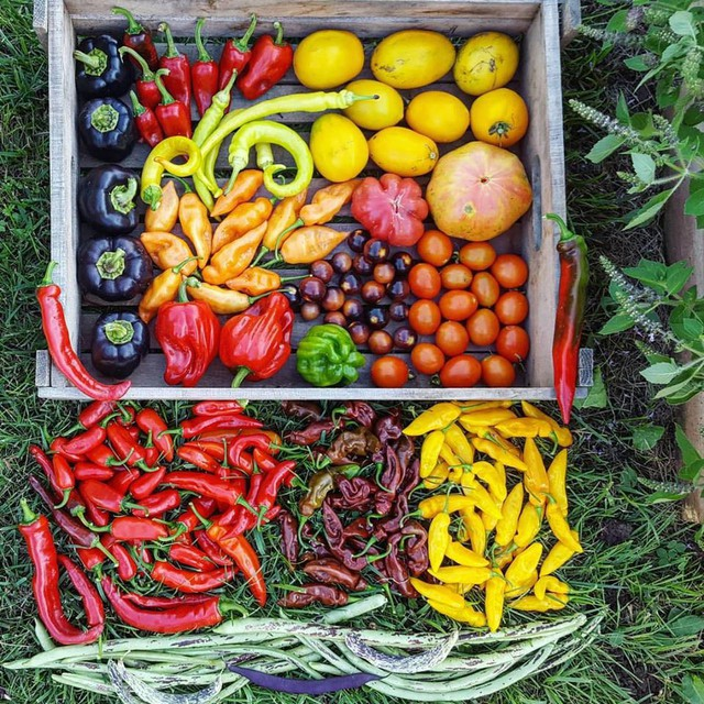 Các loại rau củ quả thu hoạch được trong vườn.