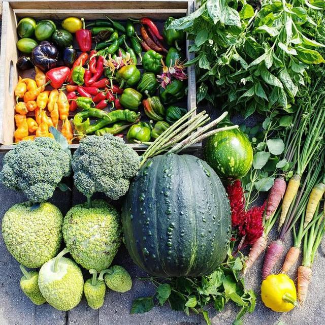 Thu hoạch rau củ quả.