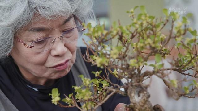 Bà Chiako Yamamoto là nghệ nhân đời thứ 4 trong nghề trồng cây bonsai. Ảnh: Business Insider.