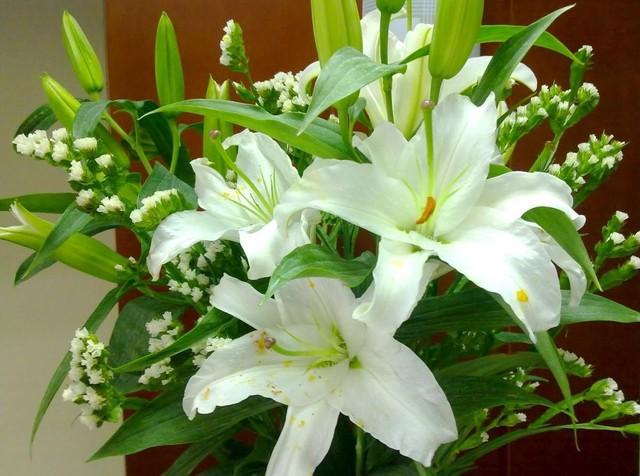 Loài hoa đẹp, rước tài lộc, sức khỏe mùa Vu lan nhưng nhiều người nhầm tên - Ảnh 1.