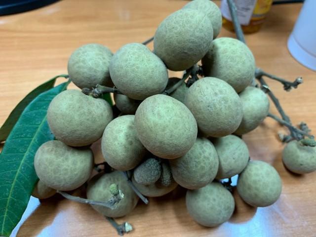 Dân Hà thành bỏ hàng chục triệu đồng bao trọn cây nhãn tiến vua hiếm có để tự hái ăn cả mùa - Ảnh 2.