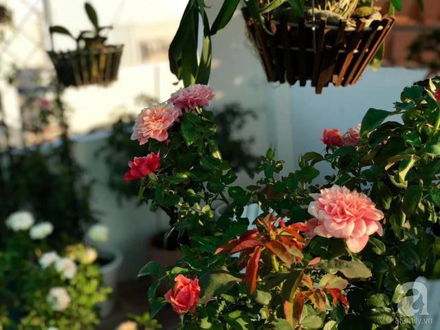 Sân thượng hoa hồng đẹp mộng mơ như trong cổ tích của cô giáo dạy Văn ở thành phố biển Nha Trang - Ảnh 15.