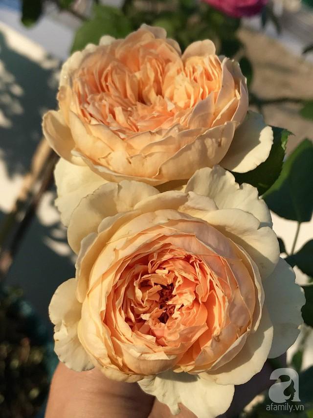 Sân thượng hoa hồng đẹp mộng mơ như trong cổ tích của cô giáo dạy Văn ở thành phố biển Nha Trang - Ảnh 16.