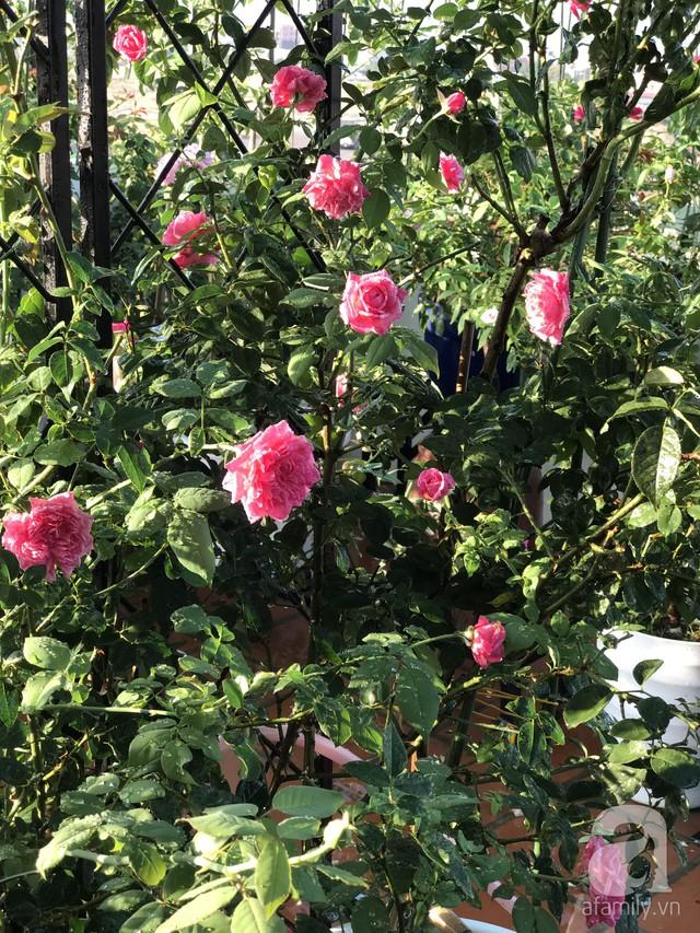 Sân thượng hoa hồng đẹp mộng mơ như trong cổ tích của cô giáo dạy Văn ở thành phố biển Nha Trang - Ảnh 18.