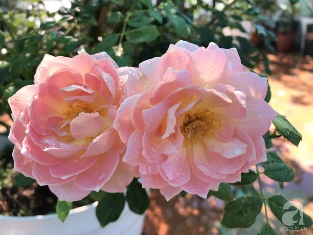 Sân thượng hoa hồng đẹp mộng mơ như trong cổ tích của cô giáo dạy Văn ở thành phố biển Nha Trang - Ảnh 20.