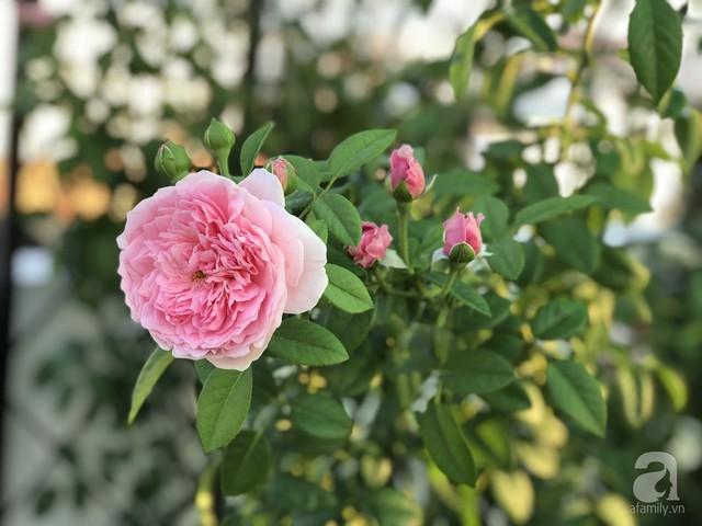 Sân thượng hoa hồng đẹp mộng mơ như trong cổ tích của cô giáo dạy Văn ở thành phố biển Nha Trang - Ảnh 21.