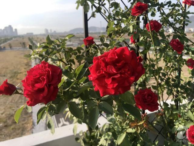 Sân thượng hoa hồng đẹp mộng mơ như trong cổ tích của cô giáo dạy Văn ở thành phố biển Nha Trang - Ảnh 23.