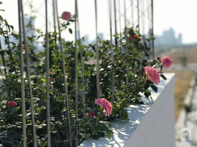 Sân thượng hoa hồng đẹp mộng mơ như trong cổ tích của cô giáo dạy Văn ở thành phố biển Nha Trang - Ảnh 24.