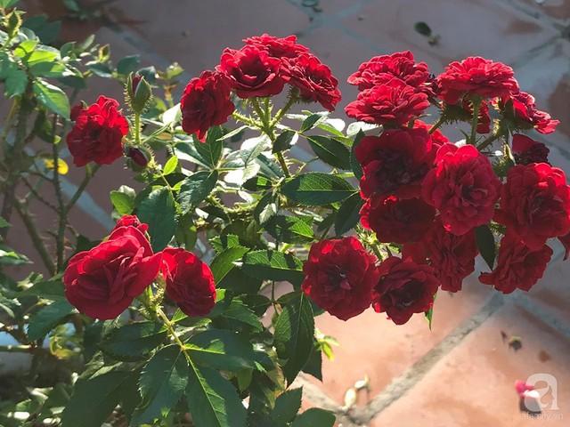 Sân thượng hoa hồng đẹp mộng mơ như trong cổ tích của cô giáo dạy Văn ở thành phố biển Nha Trang - Ảnh 27.