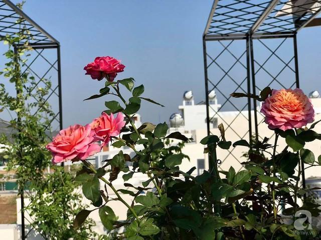 Sân thượng hoa hồng đẹp mộng mơ như trong cổ tích của cô giáo dạy Văn ở thành phố biển Nha Trang - Ảnh 29.