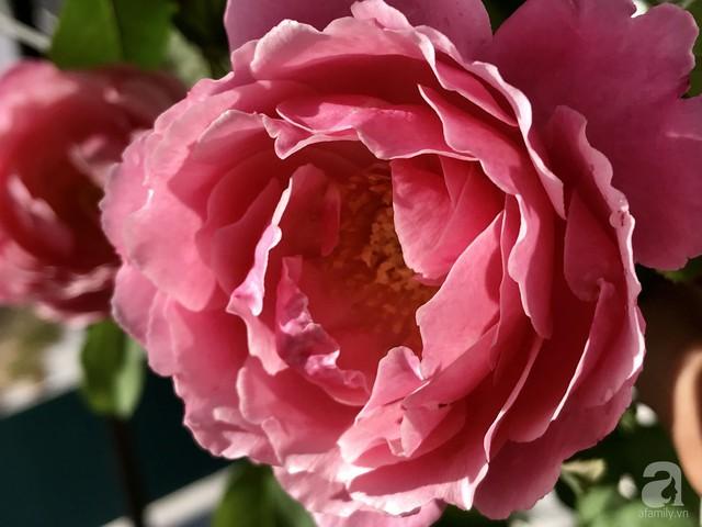 Sân thượng hoa hồng đẹp mộng mơ như trong cổ tích của cô giáo dạy Văn ở thành phố biển Nha Trang - Ảnh 30.