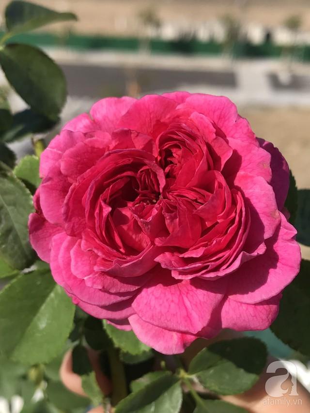 Sân thượng hoa hồng đẹp mộng mơ như trong cổ tích của cô giáo dạy Văn ở thành phố biển Nha Trang - Ảnh 32.