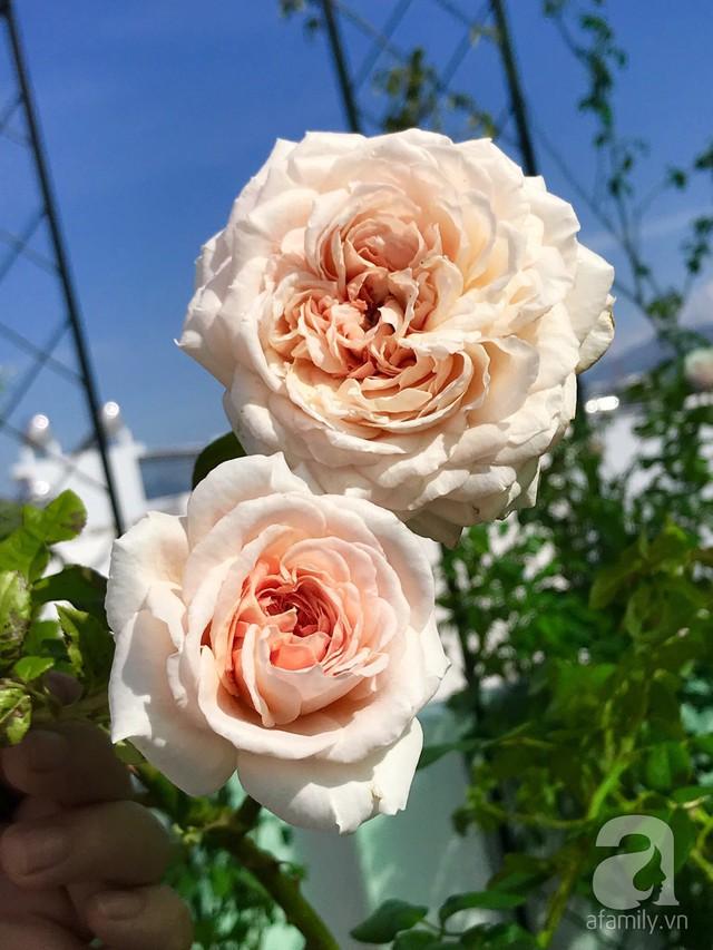 Sân thượng hoa hồng đẹp mộng mơ như trong cổ tích của cô giáo dạy Văn ở thành phố biển Nha Trang - Ảnh 35.