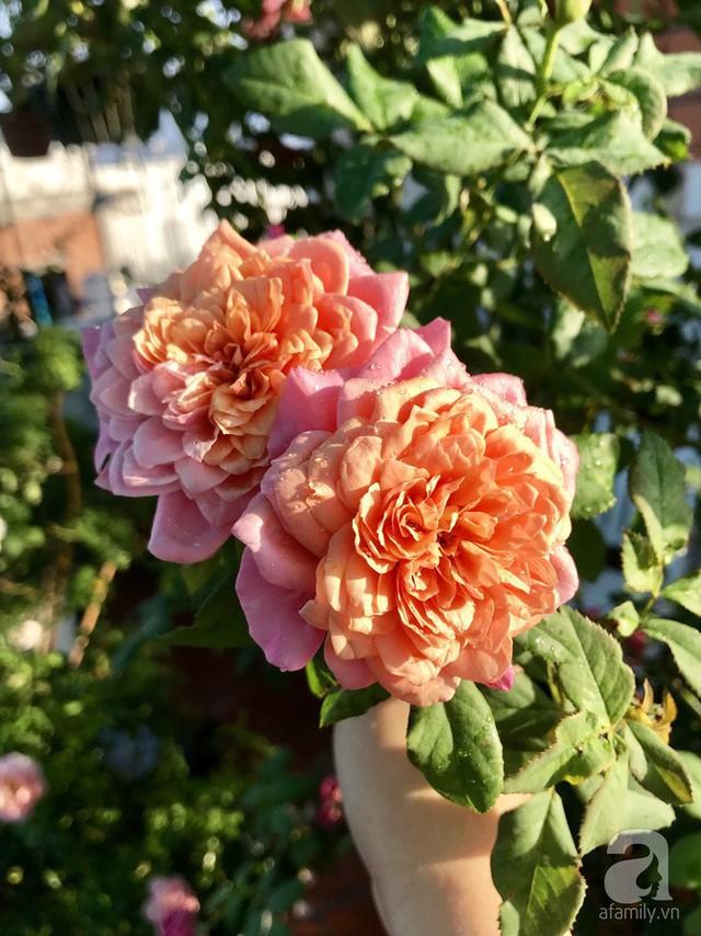 Sân thượng hoa hồng đẹp mộng mơ như trong cổ tích của cô giáo dạy Văn ở thành phố biển Nha Trang - Ảnh 37.