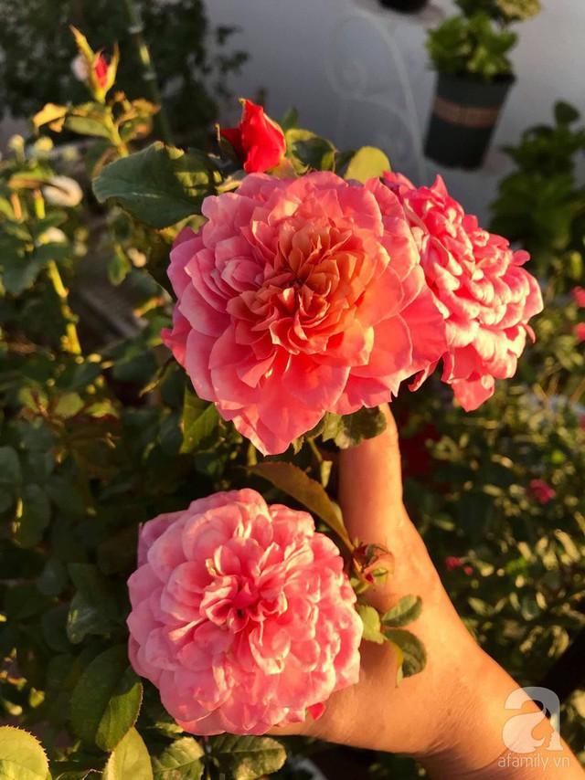 Sân thượng hoa hồng đẹp mộng mơ như trong cổ tích của cô giáo dạy Văn ở thành phố biển Nha Trang - Ảnh 38.