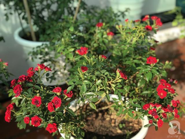 Sân thượng hoa hồng đẹp mộng mơ như trong cổ tích của cô giáo dạy Văn ở thành phố biển Nha Trang - Ảnh 39.