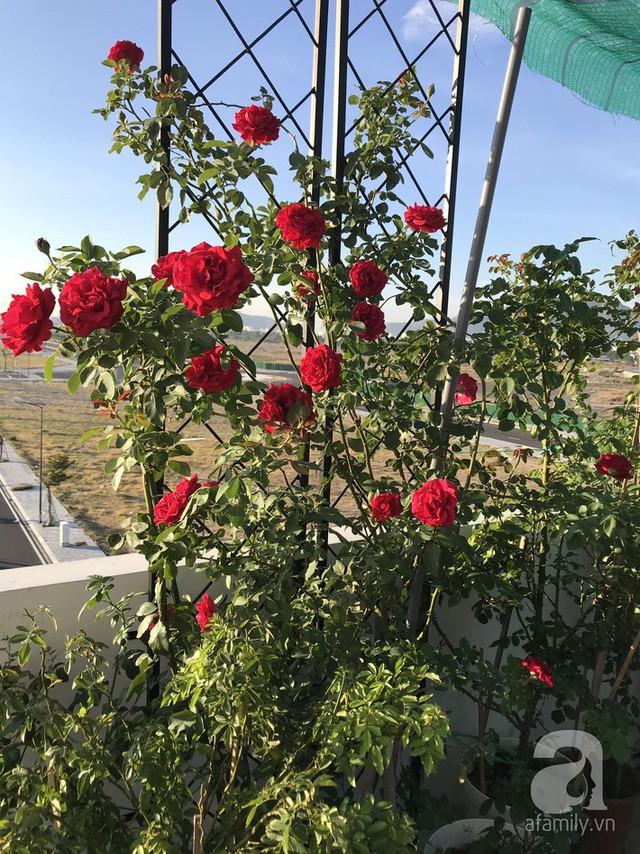 Sân thượng hoa hồng đẹp mộng mơ như trong cổ tích của cô giáo dạy Văn ở thành phố biển Nha Trang - Ảnh 40.