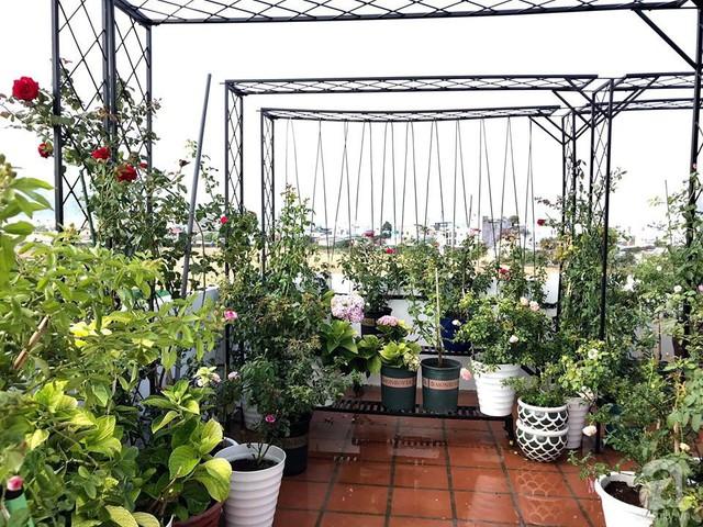 Sân thượng hoa hồng đẹp mộng mơ như trong cổ tích của cô giáo dạy Văn ở thành phố biển Nha Trang - Ảnh 5.